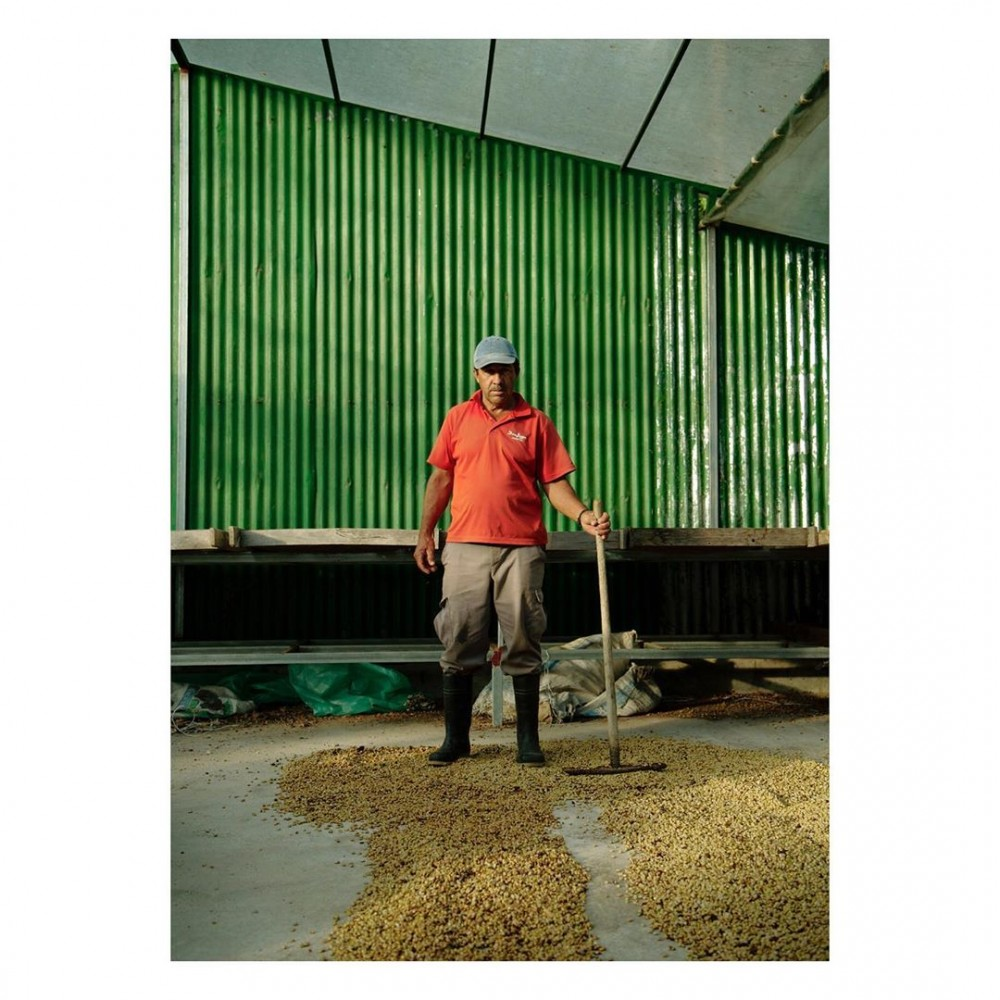 Worker at Don Juan Coffee, Arenal. The s width=