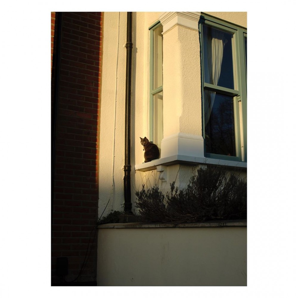 Even the cats are staying at home  – – – width=