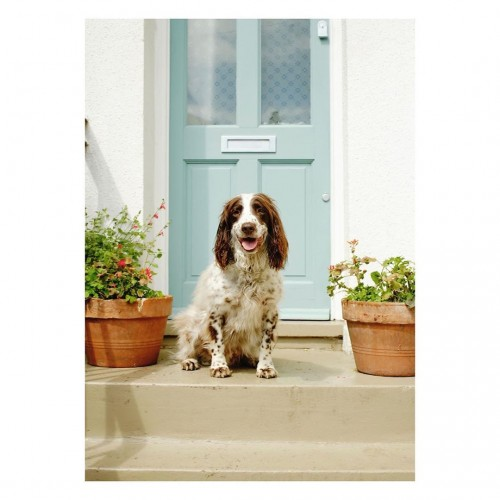 New work for dogs in lockdown /  – Henry width=